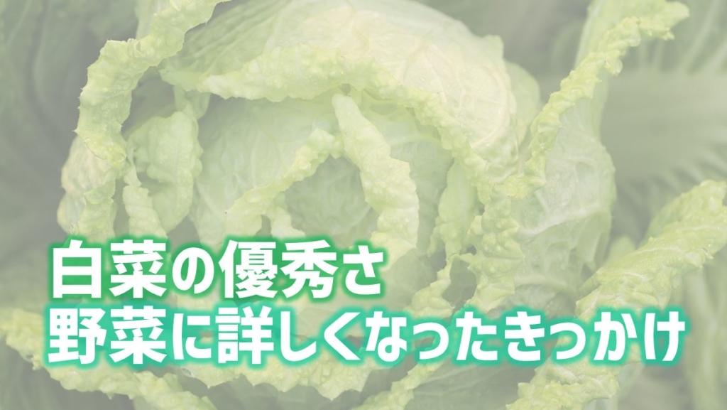 白菜 アイキャッチ